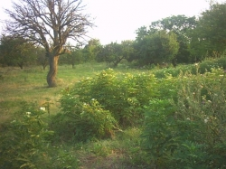 Plot of land Avren